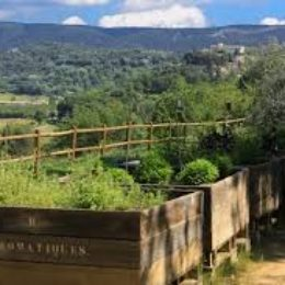 Sentier botanique au coeur du Luberon